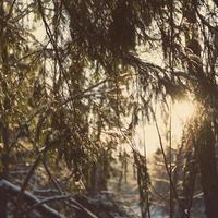 winter tree branches in abstract texture - retro vintage photo
