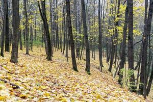 Autumn maple leaves lie in forest. Focus on foreground.