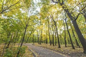Pathway in the autumn forest. Park with trees yellow