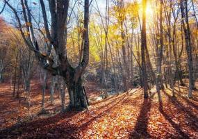 Beautiful autumn forest in crimean mountains at sunset. Nature