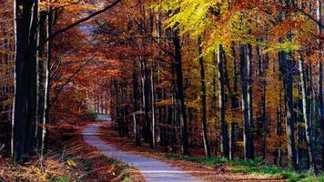 Landscape view of autumn forest colorful foliage and road