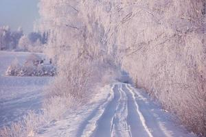 Rural winter landscape with white frost on field and forest photo