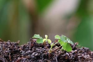Green seedlings.