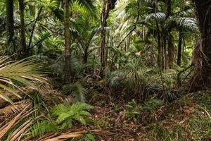 palm trees growing in tropical rainforest