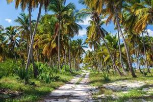 Ground road in the jungle. Dominican republic