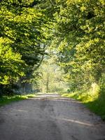 Callejón de la carretera rural iluminado por el sol vespertino