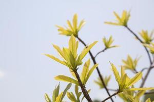fondo de hojas verdes de primavera foto