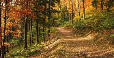 Autumn in the park of Campo dei Fiori, Varese