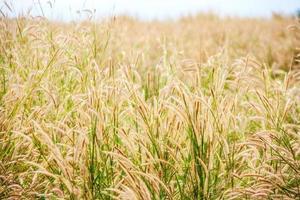 grass in autumn season