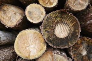 Amrum (Germany) - Pile of tree boles photo