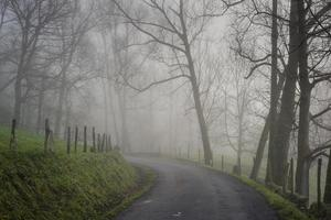 Road in the fog. Cantabria. Spain. Europe.