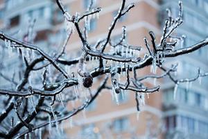 congelado en las ramas de hielo