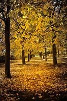 callejón de otoño foto