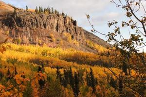 Árboles de colores otoñales en la ladera de la montaña en British Columbia