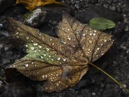 hoja de otoño con fondo de gotas de lluvia