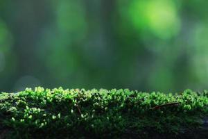 trama muschio macro licheni fungo