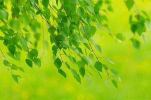 foliage spring fresh
