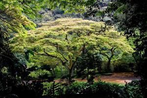 Waimea Valley Tree photo