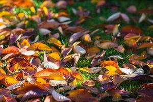 Colorful leaves in grass and sunshine