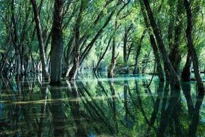 Oak forest reflected in the clear waters of a lake photo
