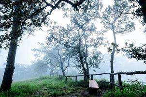 in the morning mist photo