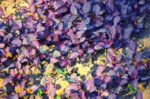 Natural leaf background captured from nature