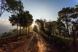 roadside nature