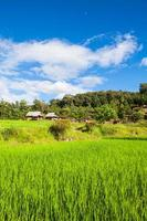 Green paddy fields near the house on the hill. photo