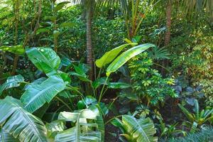 Subtropical plants in summer city park grove