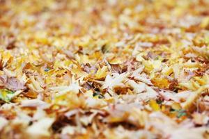 hojas de otoño en el suelo