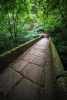 "Pedestrian bridge in the natural park ""Fragas del Eume"""