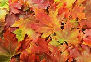 Background of autumn leafs