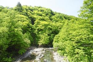 Shirakami-Sanchi photo