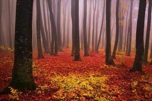 Autumn red leaves in the fog