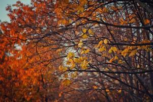 hojas de otoño rojas y amarillas en los árboles
