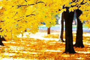 the bright colors of the autumn photo