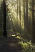 Soft Light Entering Dark Forest On An Early Misty Morning. photo