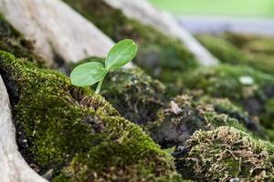 retoño en el musgo verde