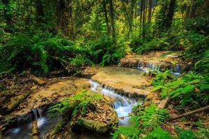 maravillosa cascada con árbol colorido en tailandia foto