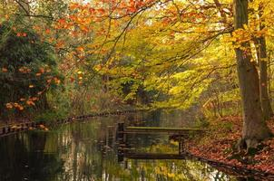 Wooden dock in the autumn