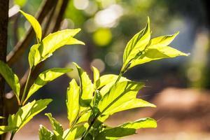 folhas na luz do sol