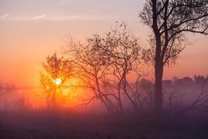 paisagem nebulosa com a silhueta de uma árvore