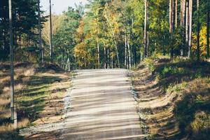 camino de ripio en el bosque. aspecto retro de película granulada.