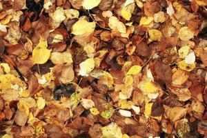 textura de las hojas amarillas caídas