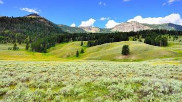 Lamar Valley in Yellowstone National Park, Wyoming in summer photo