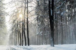 Winter in the Forest with Snow Dust on the Roads