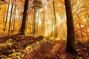 bosque en otoño, los rayos del sol iluminan la niebla foto