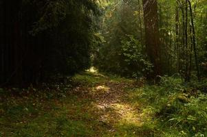 Sunlight on the forest path in the autumn fallen leaves photo