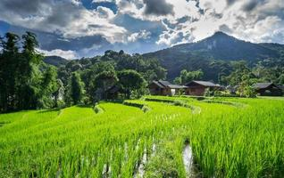Landscape rice field in chiang mai 1