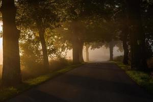 misty green alley